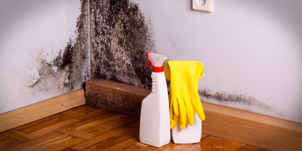 How to prevent and treat damp and mould